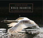 Picture of Winged Encounters: Common Birds of Dublin