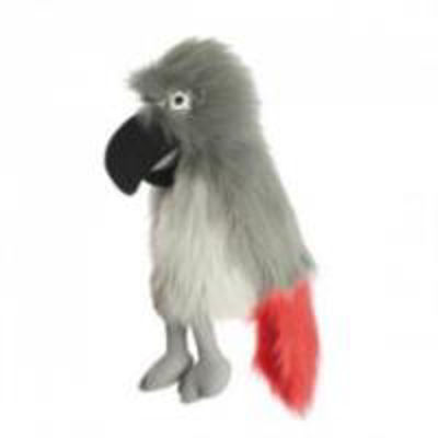 Picture of Large Birds: African Grey Parrot