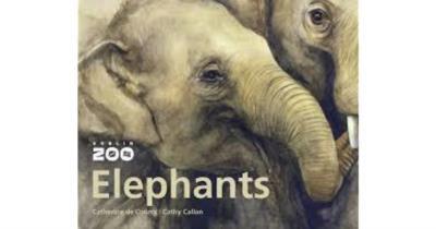 Picture of Dublin Zoo - Elephants