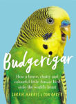 Picture of Budgerigar